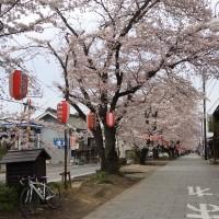 2015_obata_sakura